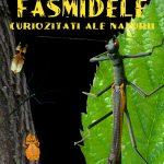 Expoziția temporară FASMIDELE, curiozități ale naturii