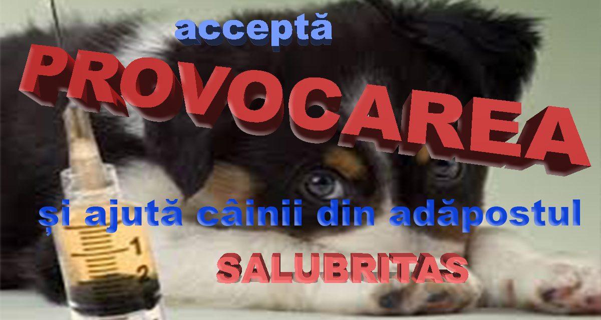 Accepta provocarea și ajuta câinii din adăpostul salubritas