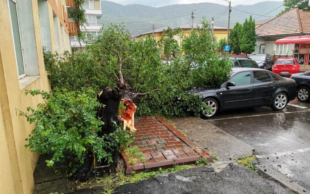 Un stâlp de curent și mai mulți copaci au fost rupți de furtuna din Piatra Neamț!